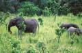 FAUNE-AFRIQUE