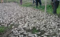 Mort en masse des poissons du lac Toho à Kpinnou dans la commune d'Athiémé. Le Gouvernement prend la mesure de la situation